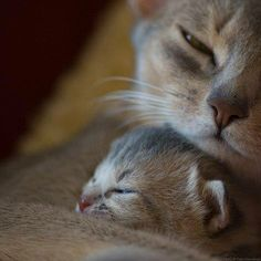 mother's care...