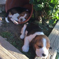 I swear they can sleep anywhere.