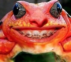 funny frogs - Bing images