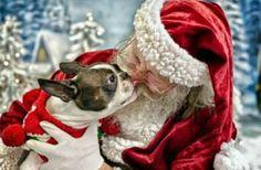 Santa loves kisses from Bostons