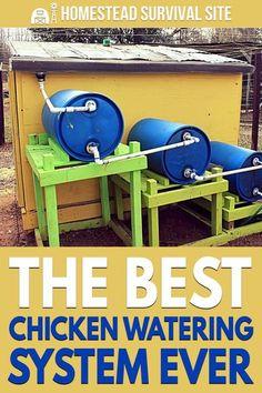 Diy Chicken Coop Plans, Backyard Chicken Coops, Backyard Farming, Chickens Backyard, Diy Chicken Waterer, Moveable Chicken Coop, Chicken Run Ideas Diy, Automatic Chicken Waterer, Backyard Coop