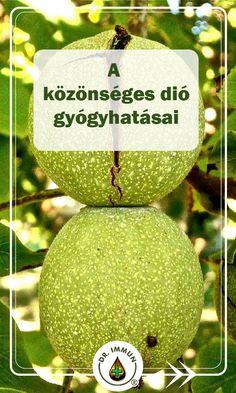 Medicinal Plants, Vertigo, Superfoods, The Cure, Christmas Bulbs, Holiday Decor, Health, Mother Nature, Salud