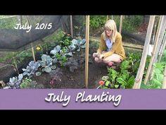 Katie's Allotment - July 2015 - Tulips, Gherkin, Squash, Turnips, Kohl R...