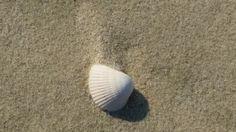 한가로운 해변