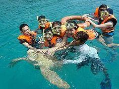 Mishandling of Turtles in Perhentian Island | Langkawi Hotel Online Booking