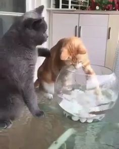 Fish is friend, not food 😃 - Cute Cats - Funny Animal Memes, Funny Animal Videos, Cute Funny Animals, Cute Baby Animals, Cat Memes, Animals And Pets, Funny Cats, Beautiful Cats, Animals Beautiful