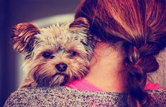 Looking for a flexible side business you can fit around your day job or other commitments? Here's how a stay-at-home mom got started as a dog sitter. Yorkshire Terrier, Small Dog Breeds, Small Dogs, Vintage Instagram, Yorkie Puppy, Best Dog Food, Photography Jobs, Dog Tattoos, Federal