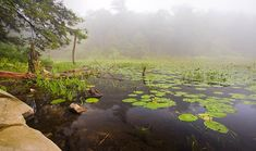 Louisa Pond at Shaupeneak Ridge