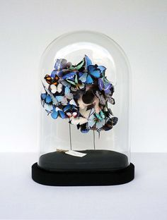 Papillons sous globe