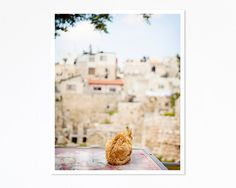 Cat Overlooking Ancient Ruins Israel  by KimLucianPhotography, #fPOE