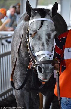 Destin in the belmont stakes Majestic Horse, Majestic Animals, Pretty Horses, Beautiful Horses, The Belmont Stakes, Derby Winners, Sport Of Kings, Thoroughbred Horse, Racehorse