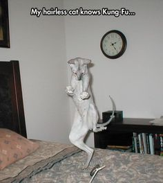 Enjoy more #funnypictures @ http://funnypictures247.com