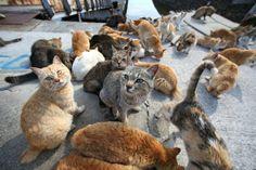 まさに〝猫島〟いや「ネコの惑星」人間15匹に猫が100猫! cat