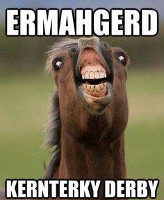 Funny Horse Memes (13 Pics)Vitamin-Ha | Vitamin-Ha