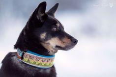 Ompele persoonallinen kaulapanta koiralle. http://www.etlehti.fi/blogit/reijan-rasymatto/ompele-persoonallinen-kaulapanta-koiralle