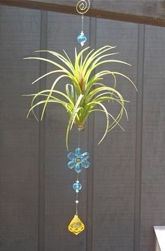 Air Plant Daisy Window Ornament  Unique Gift by TheLivingArt, $16.00