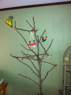 Pet parrots require plenty of out-of-cage time, toys and enrichment to keep them healthy and happy. Unfortunately for us humans, they will also do a number on your walls, woodwork and furnishings- unless we give them proper places to play! I created this Instructable so that other bird lovers can make their own safe parrot play spaces. There are many commercially available play stands, but they are very pricey ($100 - $500 or more for a nice free standing gym!) All of the materials can be…