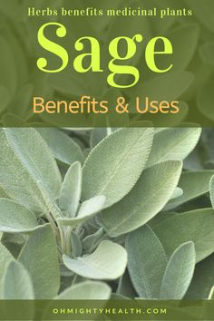 My favourite herb! Great for my menopause, it has eased my hot flushes enormously. Have a look inside at sage benefits & uses. I have fallen in love with this herb big time. Medicine Garden, Herbal Medicine, Holistic Medicine, Sage Herb, Sage Plant, Natural Health Remedies, Herbal Remedies, What Is Sage, Herbs For Menopause