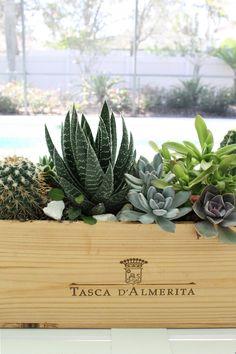 DIY succulent centerpiece in wood wine box