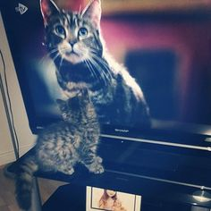 """""""Why is my twin on television?"""" 