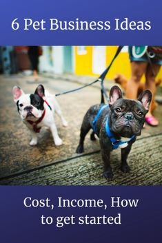 6 Pet Businesses Ideas: Cost, Income, How to get started Pet Sitting Jobs, Three Dog Bakery, Pet Paradise, Dog Walking Business, Palace Pets, Dog Grooming Business, Secret Life Of Pets, Business Marketing, Funny Animals