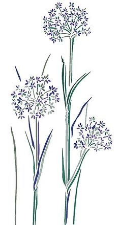 Wild Flower Stencils Cow Parsley Stencil