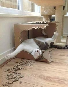 Kitty Renovation