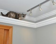 cat shelf from molding, good idea! Wonder how much weight it can support though - 5 kg kitten isn't getting any lighter!