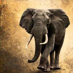 Drucke auf Leinwand - Elefant 90 x 90 cm o. kleiner Leinwand - ein Designerstück…