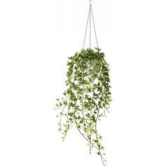 Bilderesultat for hengeplante ikea Hedera Helix, Plant Decor, Ivy, Planters, Herbs, Garden, Studio Apartment, Tattoo Studio, Minimalism