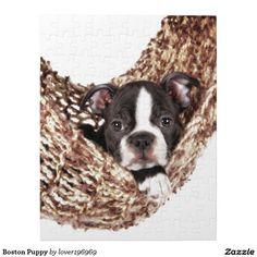 Boston Puppy Jigsaw Puzzle