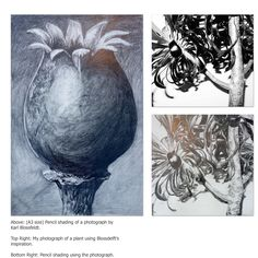 Pencil drawing, tonal work, Karl Blossfeldt, own photograph, natural forms. Pencil Drawings Of Nature, Pencil Drawings For Beginners, Karl Blossfeldt, Form Drawing, Theory Of Love, Gcse Art, Seed Pods, Cool Pets, Natural Forms