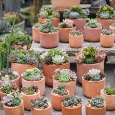 Happy Mother's Day! ⠀  These succulent beauties are waiting for all you procrastinators. 🙃⠀  #rogersgardens #beautyinliving #succulents ⠀  .⠀  .⠀  .⠀  .⠀  .⠀  .⠀  .⠀  .⠀⠀  .⠀⠀  .⠀⠀⠀  .⠀⠀⠀⠀  .⠀⠀⠀  .⠀⠀⠀  #succulove #succulentgarden #succulentaddict #succulentgarden #plantsofinstagram #plantgang #botanicalpickmeup #greenliving #green #lovelysquares #thehappynow #postitfortheaesthetic #plantshopping #garden #outsideisfree #instagood #love #flashesofdelight #deeplyrooted