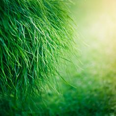 Grass Texture by ►CubaGallery Grass Texture, Green Scenery, Photo Processing, Lightroom Tutorial, Green Nature, Green Earth, Green Grass, Shades Of Green, Green Colors