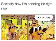 basically how i'm handling life - Google Search