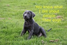Quotes about Dogs - You know what I like about people - their dogs