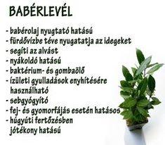 Életmód cikkek : Zöldség és gyümölcsök hatásai Jaba, Home Remedies, Vitamins, Spices, About Me Blog, Health Fitness, Healthy Eating, Herbs, Tips
