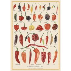 Koustrup & Co Plakat - Chili Botanical Drawings, Botanical Illustration, Spring Forest, Edible Wild Plants, Green Zebra, Poster Prints, Art Prints, Posters, Green Grapes