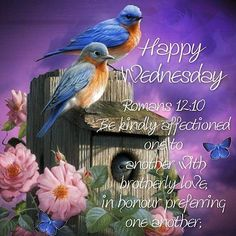 Have a blessed Wednesday Blessed Wednesday, Good Wednesday, Wednesday Morning, Good Morning, Romans 12 10, Blessed Quotes, Wildlife Paintings, Morning Blessings, Bible Scriptures