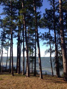 Sam Rayburn Lake Big Sam, Lake Cabins, Kayaking, Texas, Hiking, Camping, Plants, Walks, Campsite