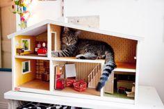 Kitty has 3 rooms and indoor plumbing