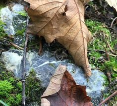 Leaves and rock