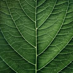 This picture of the leaf shows texture. This shows texture because you can see the veins within the leaf and imagine what is would feel like in real life.