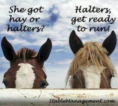 LOL! Horse humor.