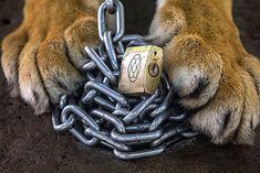 Not My Circus, Animal Cruelty