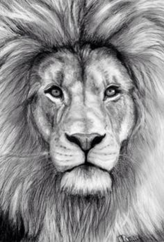 This with blue eyes #lion #tattoo #fierce