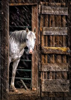 beautymothernature:    Beautiful Barn in the rain Love Moments