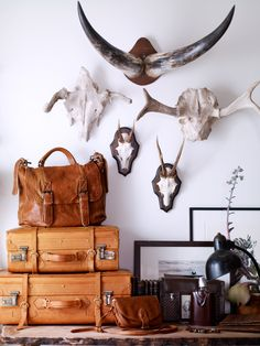 Home Decor >> Horns, leather decor. vintage suitcases & antlers