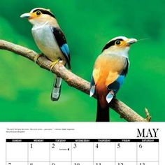 """Free 2017 Cornell Bird Calendar - Freebies in your Mail..Would you like a brand new calendar for 2017? Well, thanks to Cornell Labs, you can get one for free. They are giving away a free """"a year with birds"""" 2017 calendar. This freebie is offered up right on their website. Visit them and look on the right side of the site and fill out the order form."""