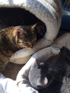 最後の子猫3人。ジンちゃん、チィちゃん、アオちゃん